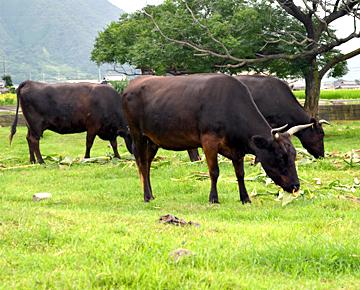 国産黒毛和牛オリーブ牛